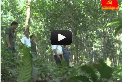 Chuyện về mô hình rừng Cộng đồng_Một gia đình hai sổ đỏ: Hợp tác xã Lâm nghiệp Trường Sơn, Hương Sơn, Hà Tĩnh